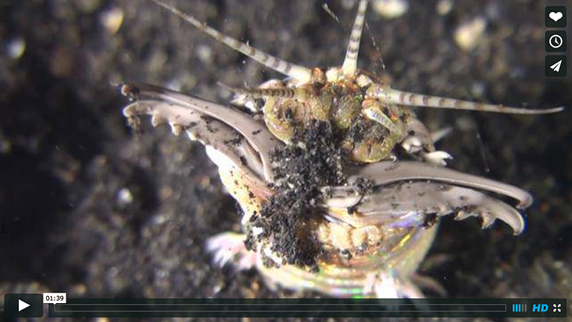 screenshot of a video on Bobbit Worms