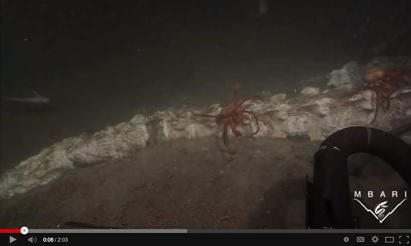 screenshot of Boneworms on dead whales in Monterey Bay video