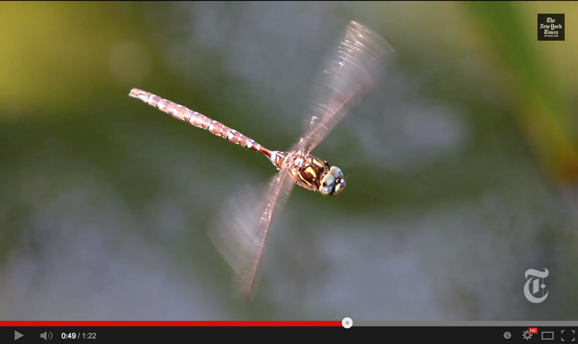 Dragonflies Are Formidable Hunters Because Of Their Flying Abilities Huge Eyes And Complex Nervous Systems Read More About In The Article