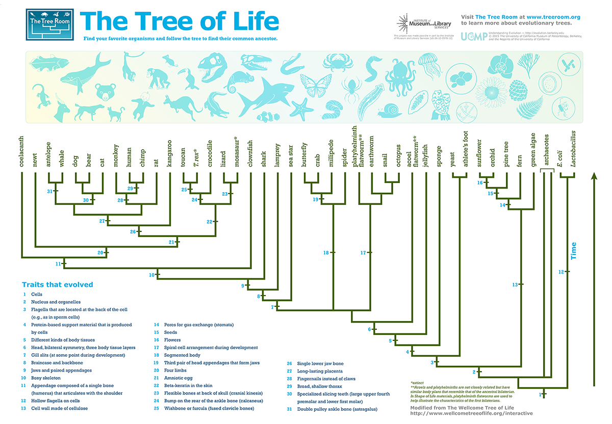 About flatworms the shape of life the story of the animal kingdom check out our new tree of life illustration that shows how all living things are related pooptronica Images