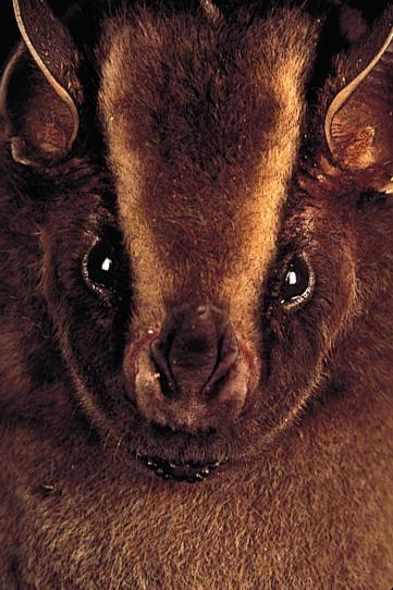 photo of fruitbat