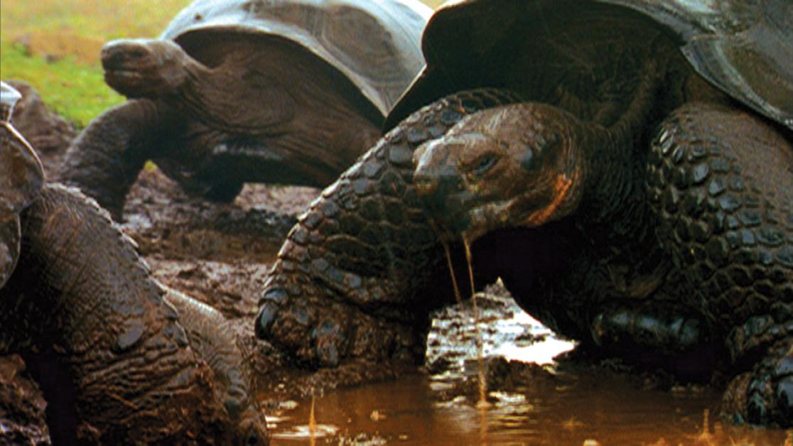 photo of Galapagos tortoises