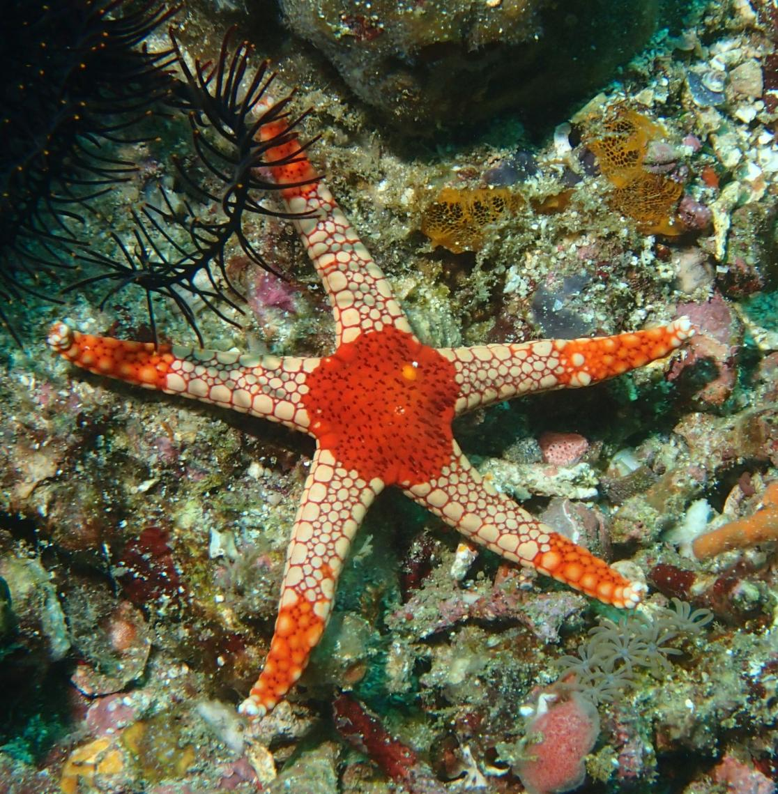 photo of a necklace starfish
