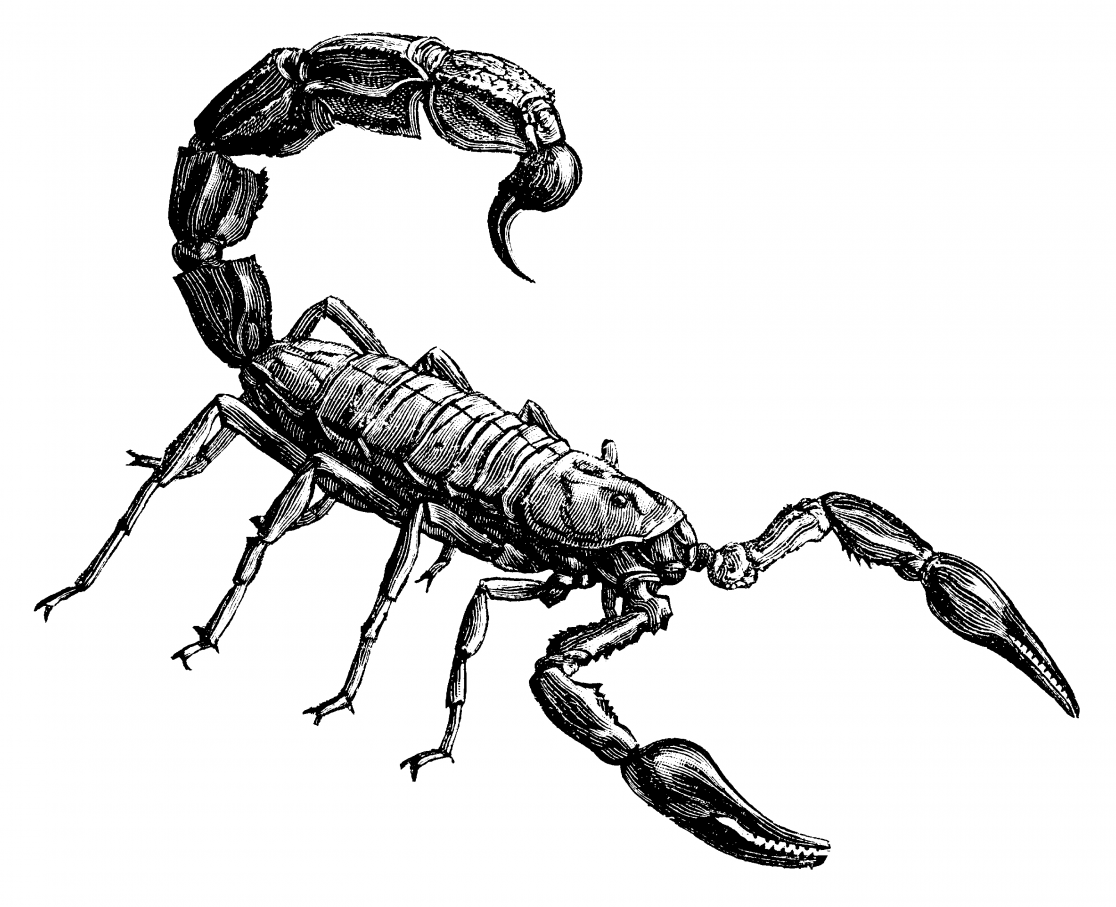 about terrestrial arthropods