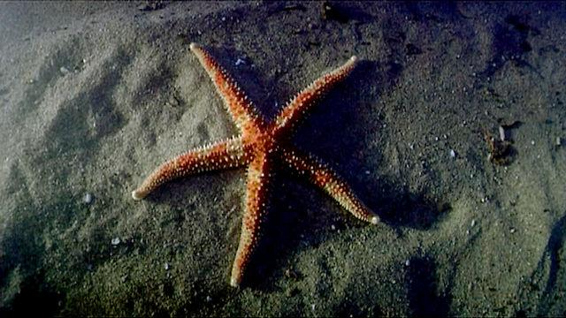 Echinoderms The Ultimate Animal The Shape Of Life The Story Of