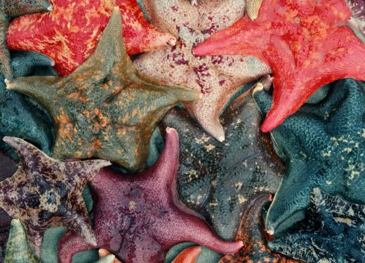 photo of bat stars