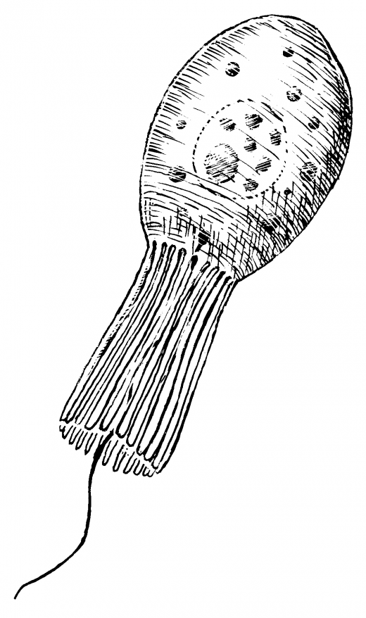 drawing of a Collarcell