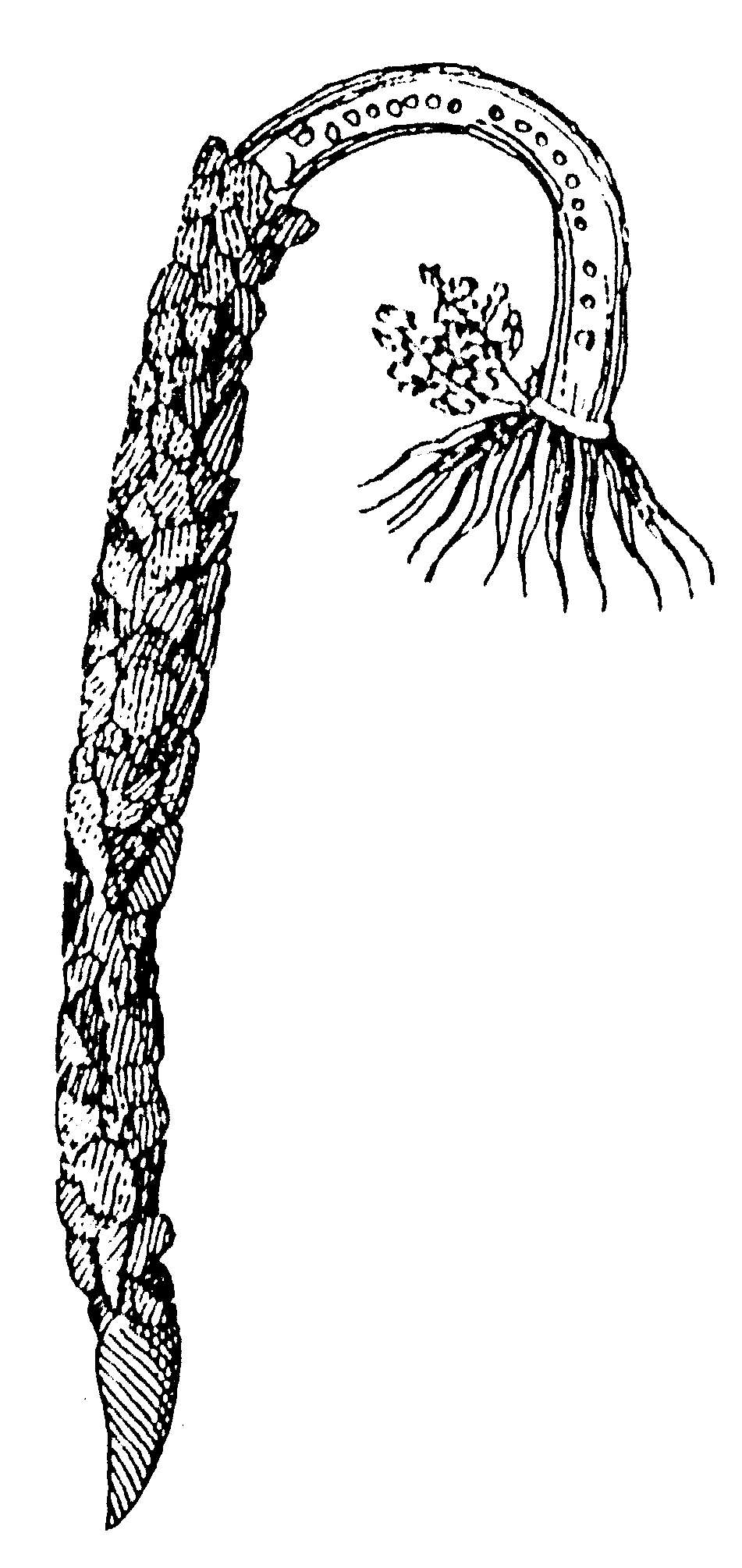 more resources about annelids the shape of life the story of